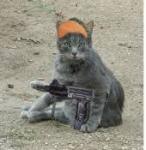 kucing jihad